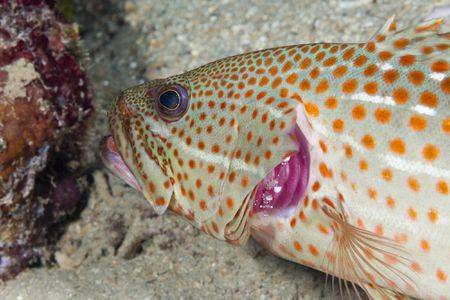 Learn How Gill Filaments Work In Fish
