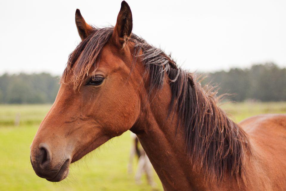 caballo de cerca