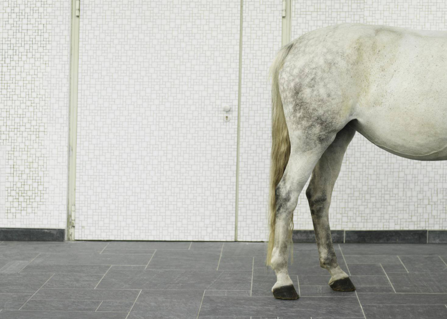 Horse standing by wall, hind quarters