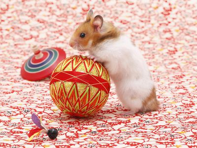Hamster Health and Diseases