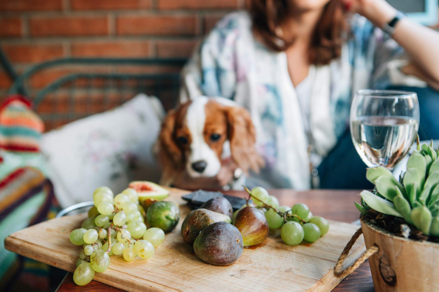 Dog staring at grapes and figs on a cutting board.