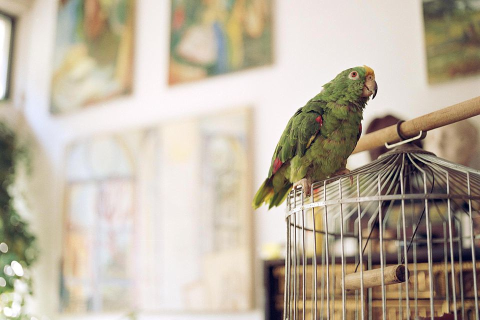 Parrot standing on outside of cage