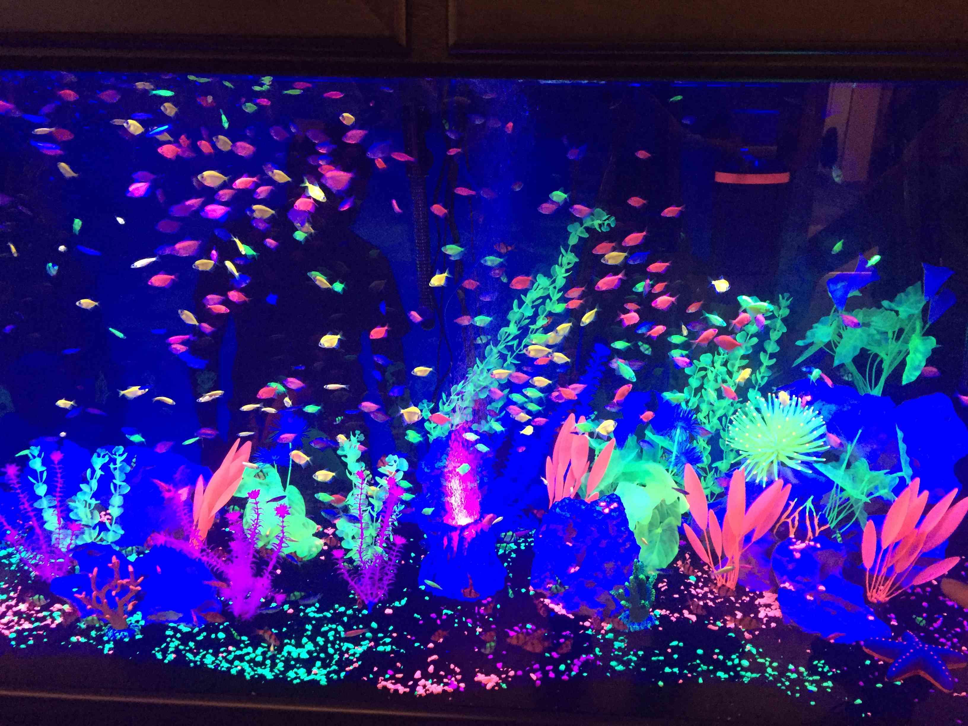 GloFish® Tank
