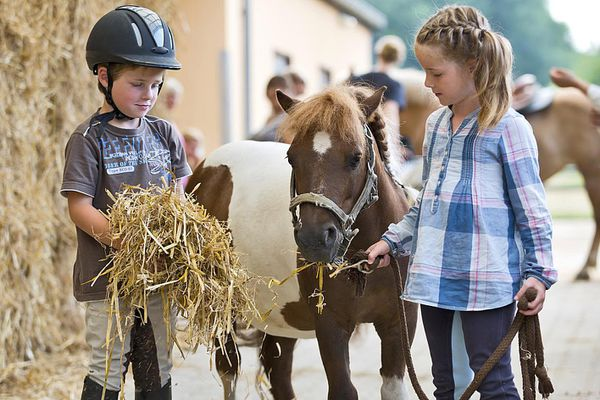Boy and girl at riding stable with mini shetland pony
