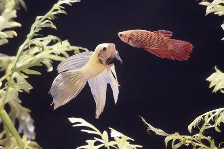 How to Treat Fin Rot in Aquarium Fish