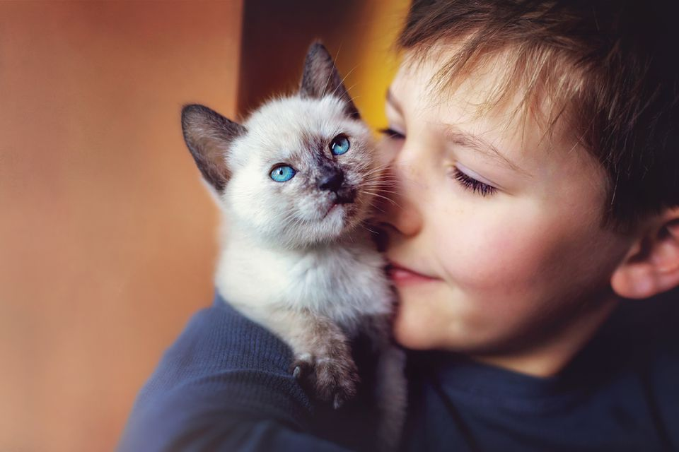 Young boy with a kitten on his shoulder