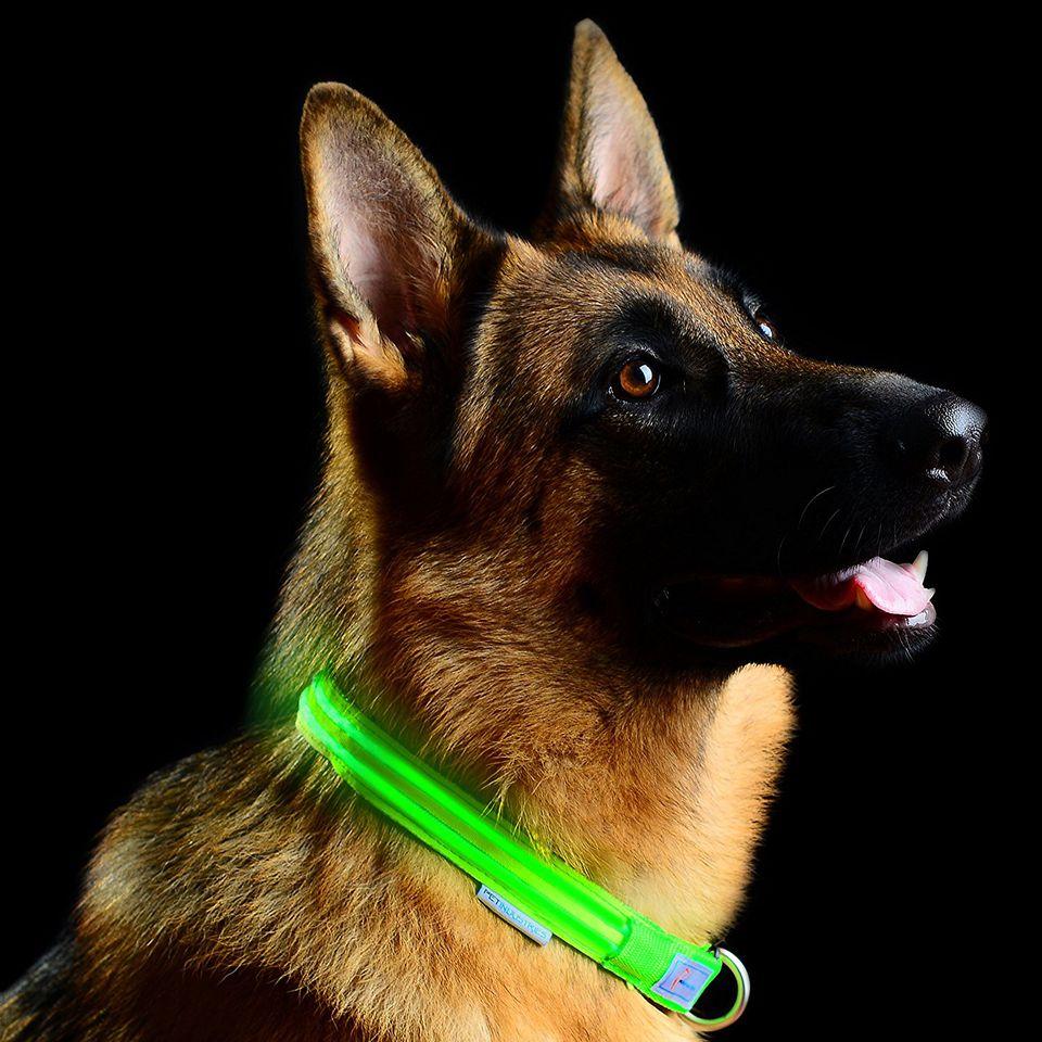 Metal Buckle LED Dog Collar