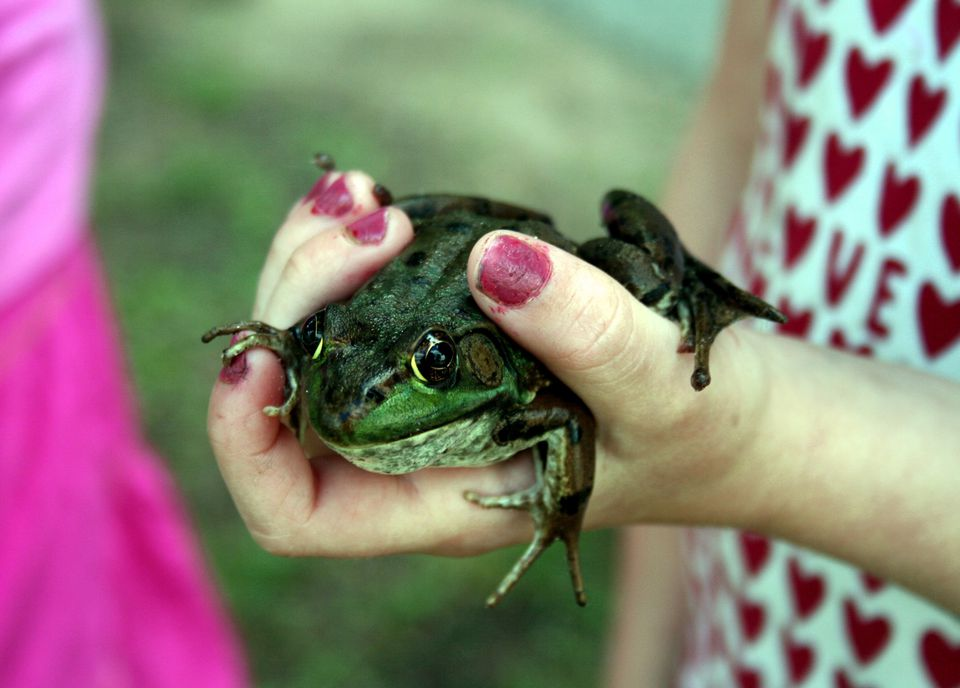 A hand holding a frog