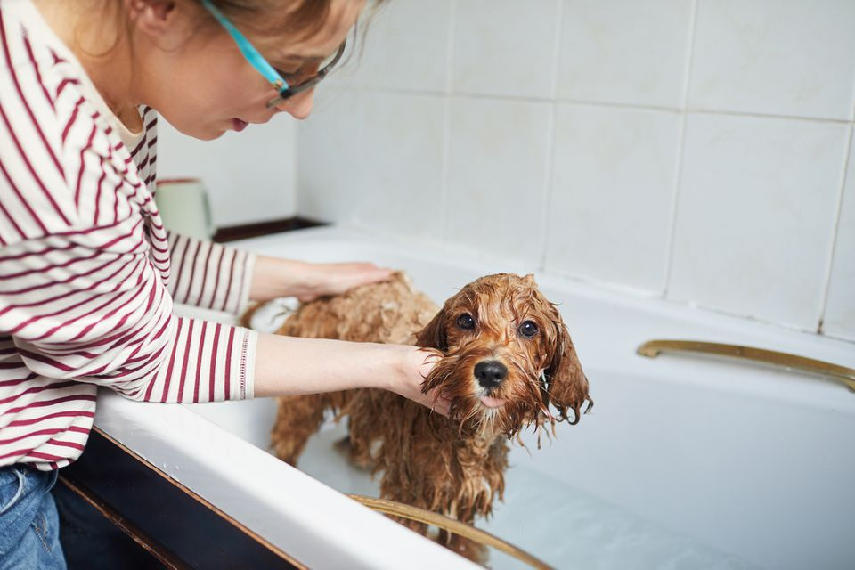 Woman washing her dog
