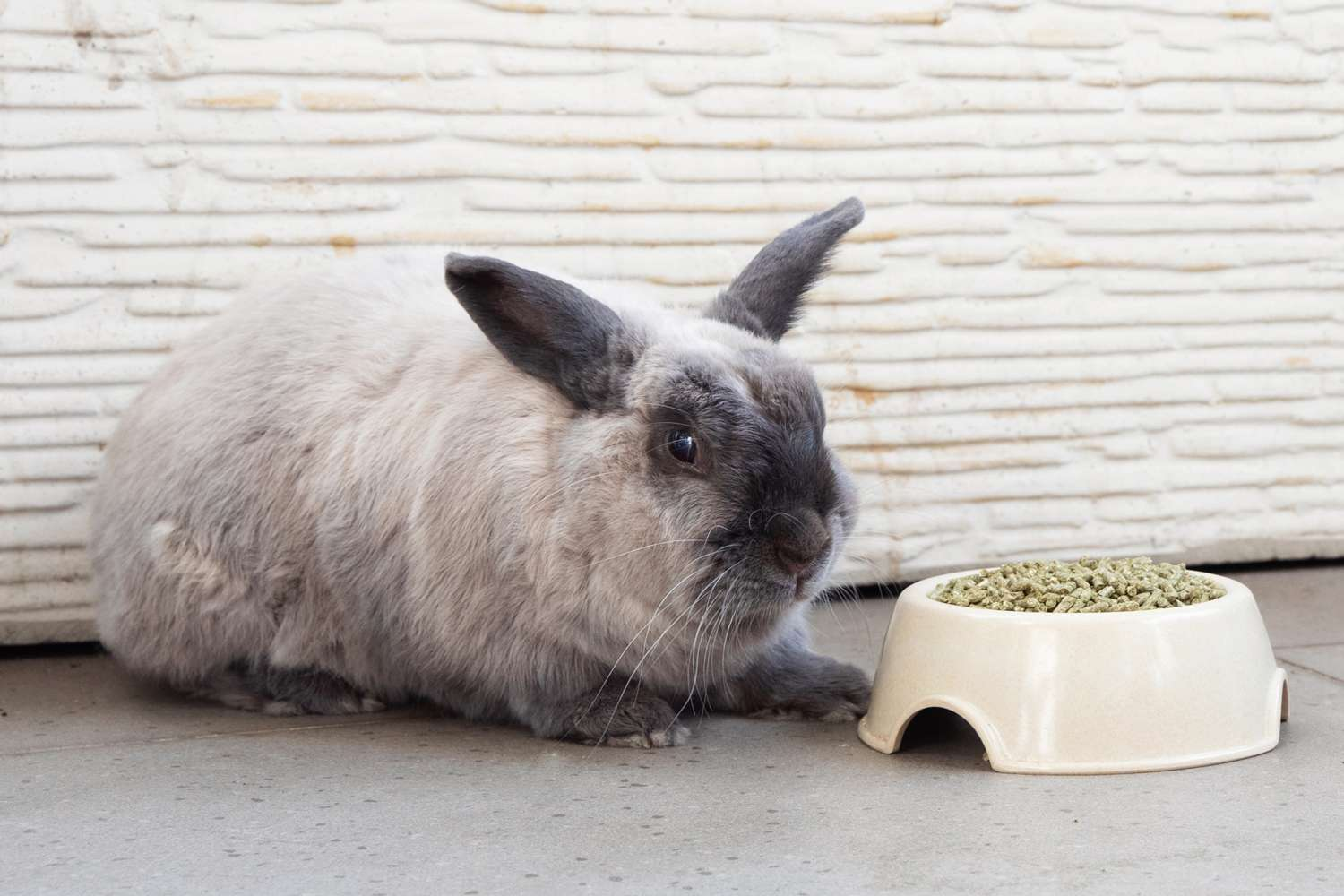 Gray and black rabbit laying down next to bowl of rabbit food