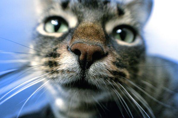 Close up Kitty