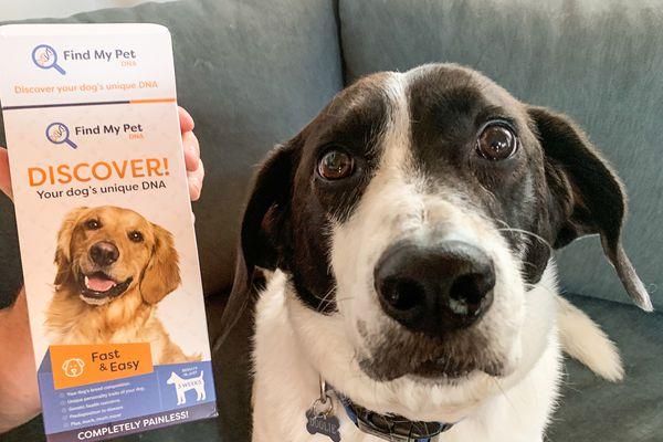 Find My Pet DNA Dog DNA Test
