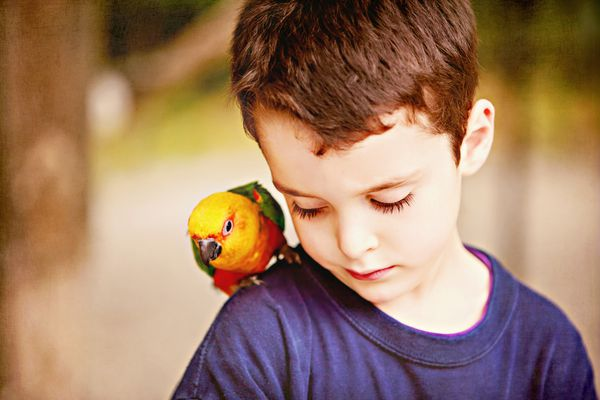 Boy with colorful parrot