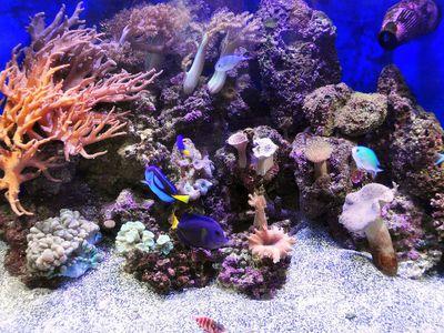 Aquascaping Live Rocks In Your Saltwater Aquarium