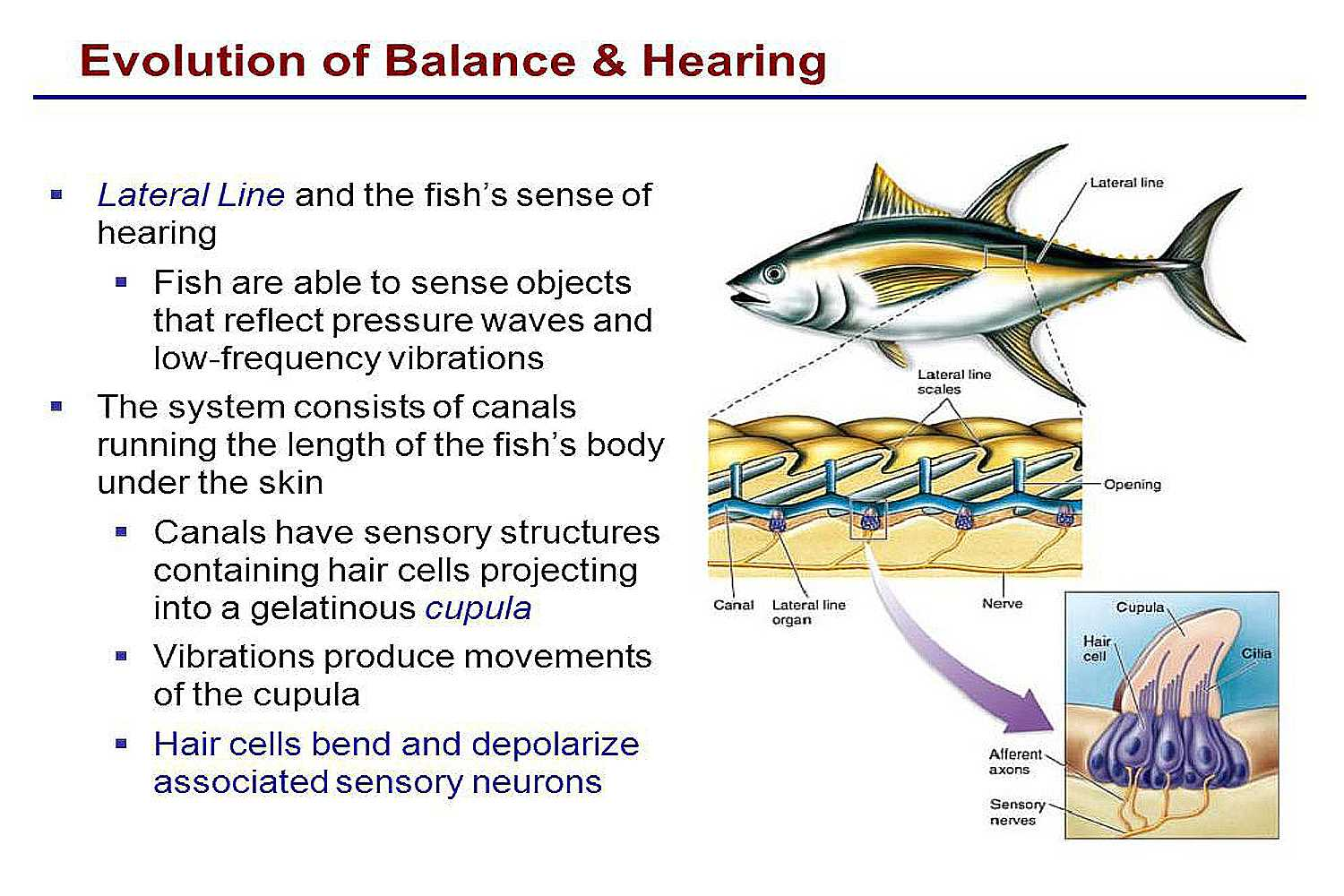 How Do Fish Swim Balance How Much Oxygen And Food Do They Need