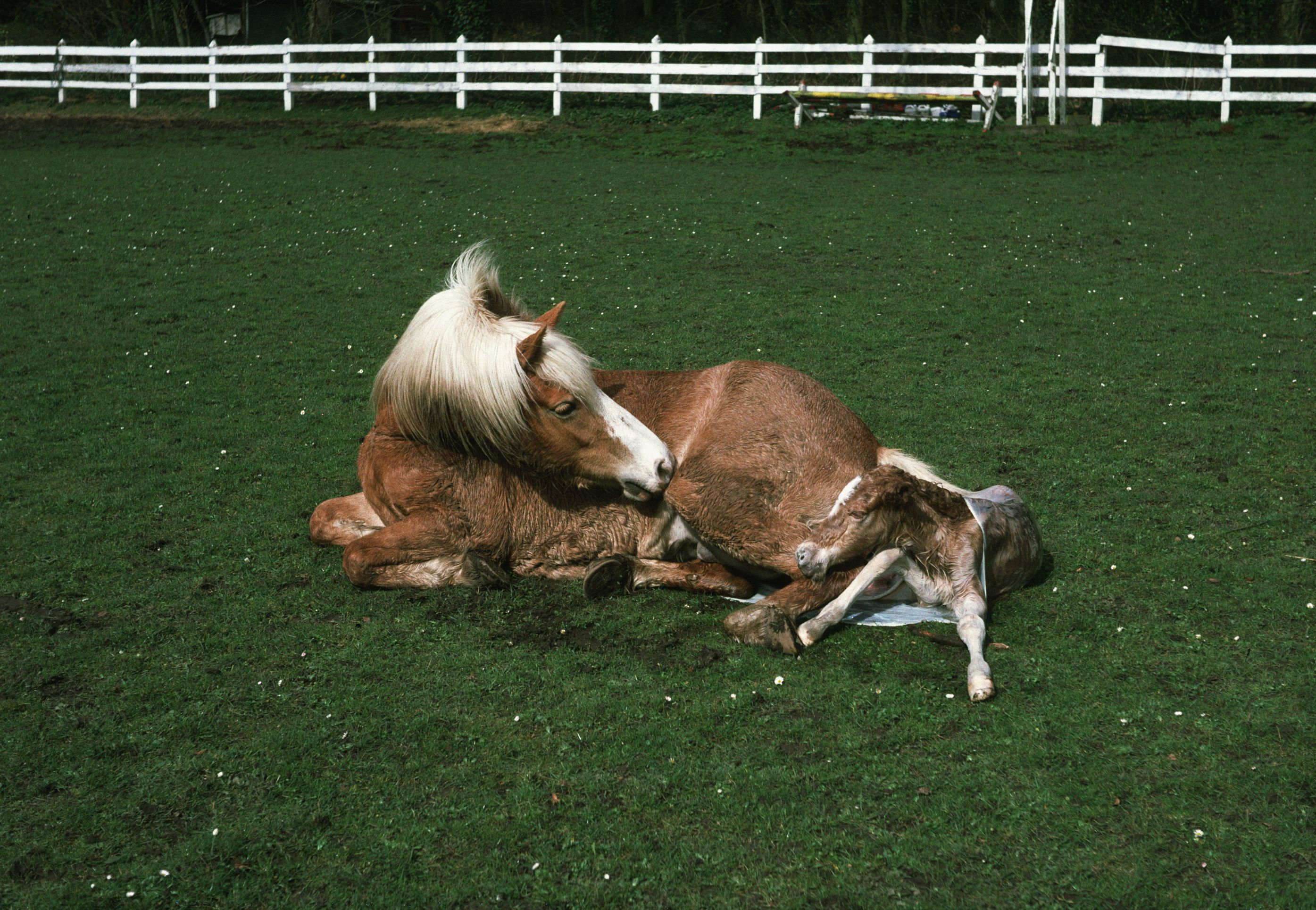 10 Facts About Foals