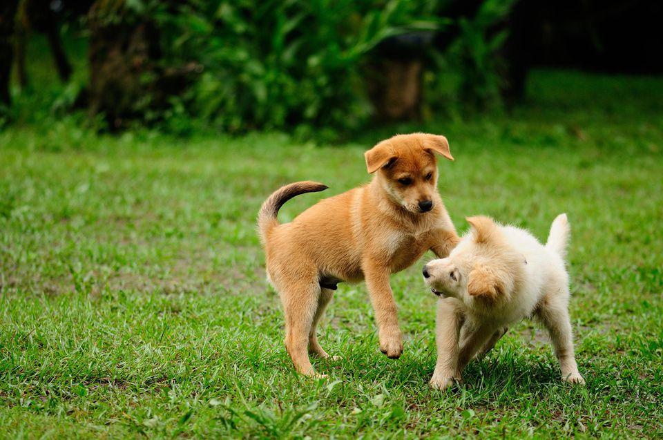 Puppyish, dog