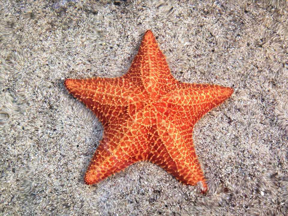 A starfish in the sand