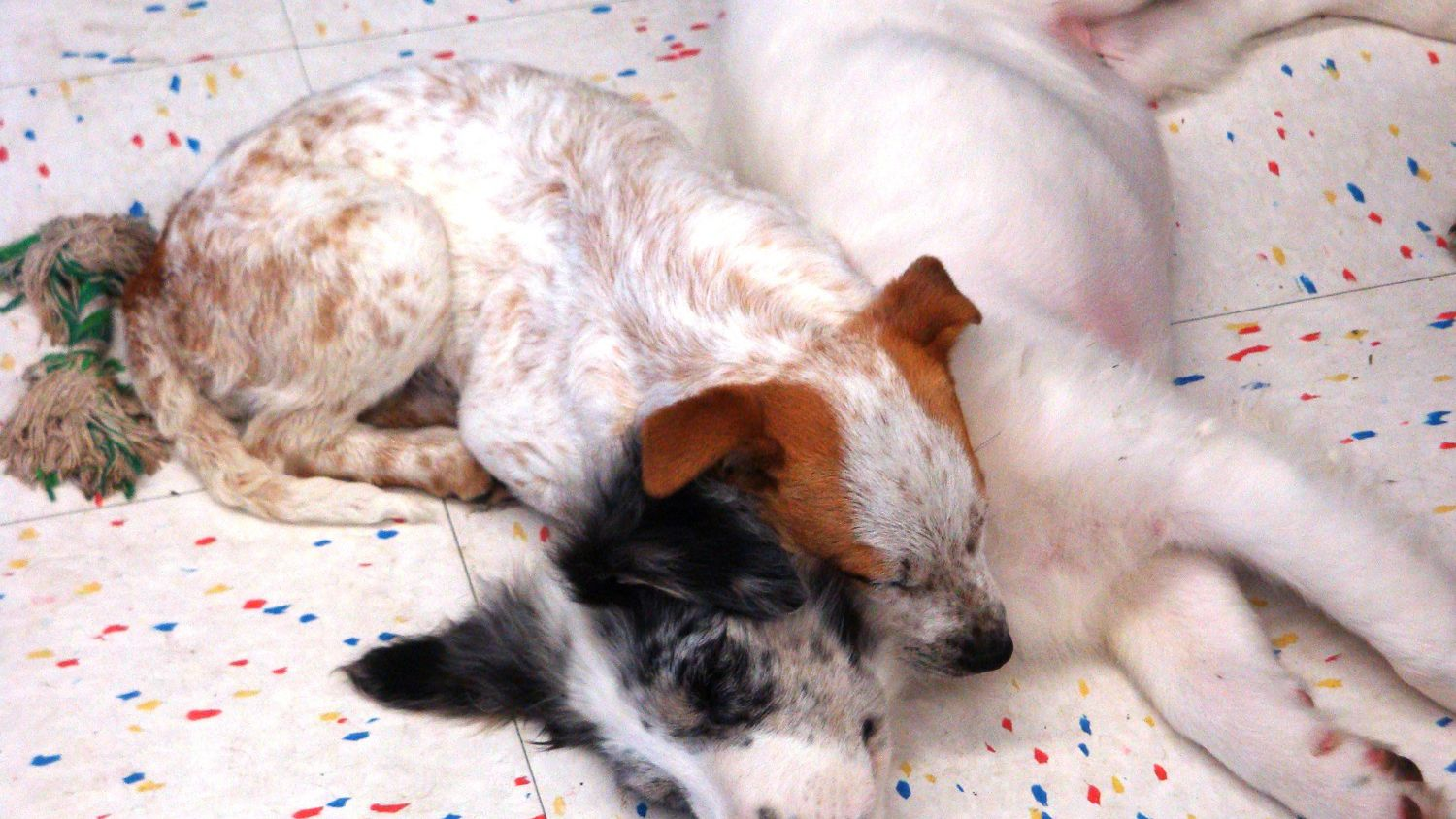How To Treat Ear Mites In Puppies And Dogs