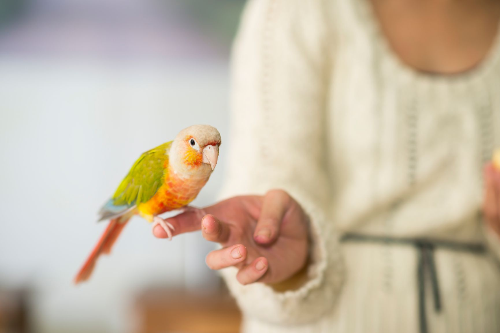 Parakeet on a finger