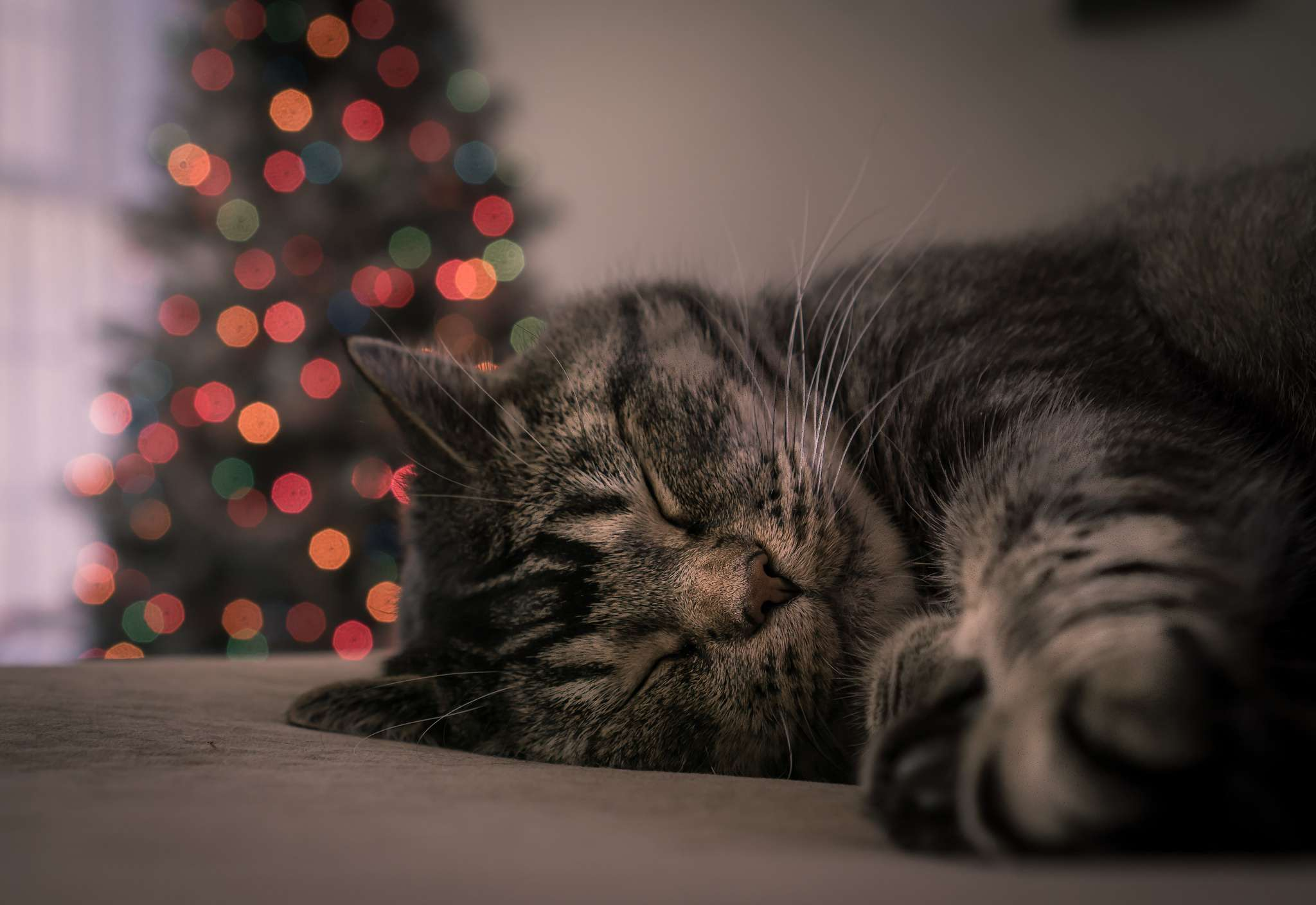 cat sleeping by christmas tree