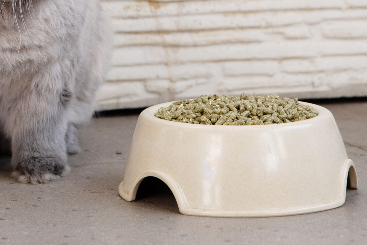 closeup of rabbit pellets