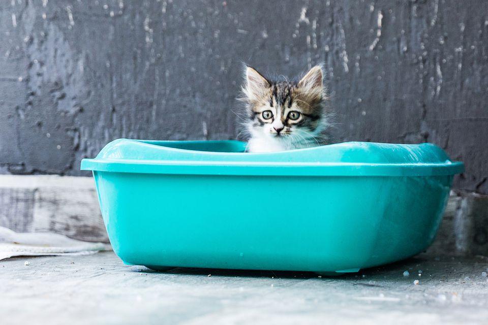 gatito en una caja de arena