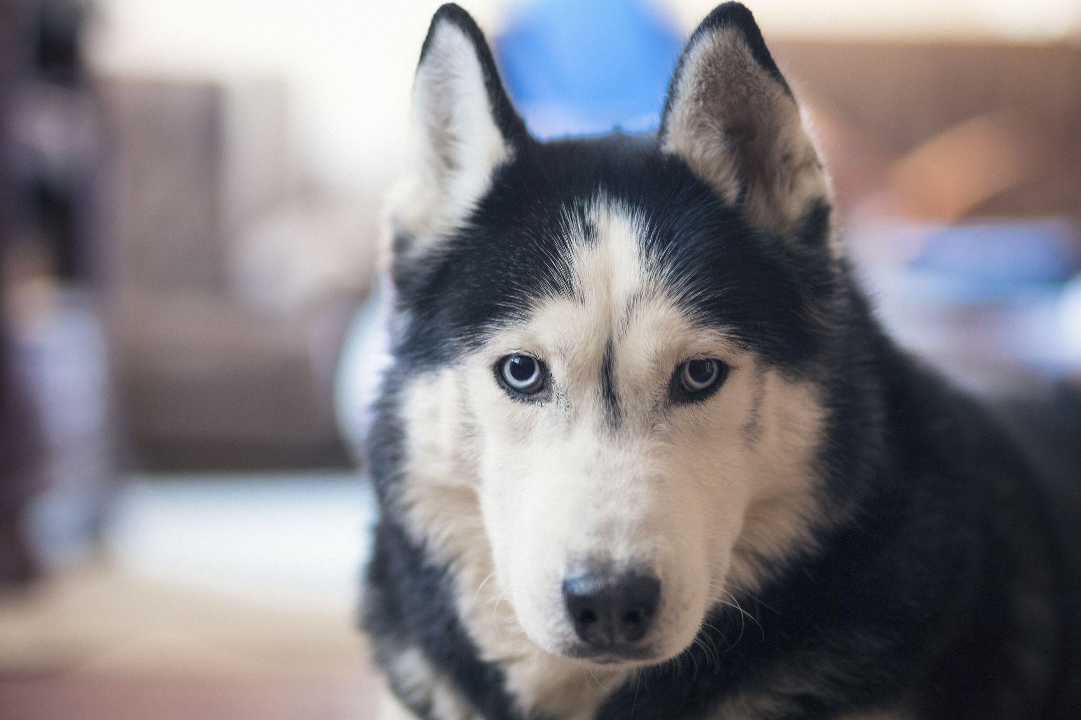 7 Worst Dog Breeds for Kids