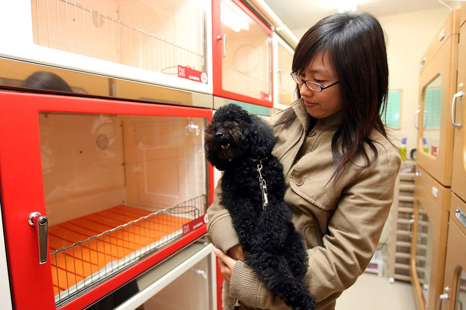 A woman and her pet dog inspect a pet hotel in Japan