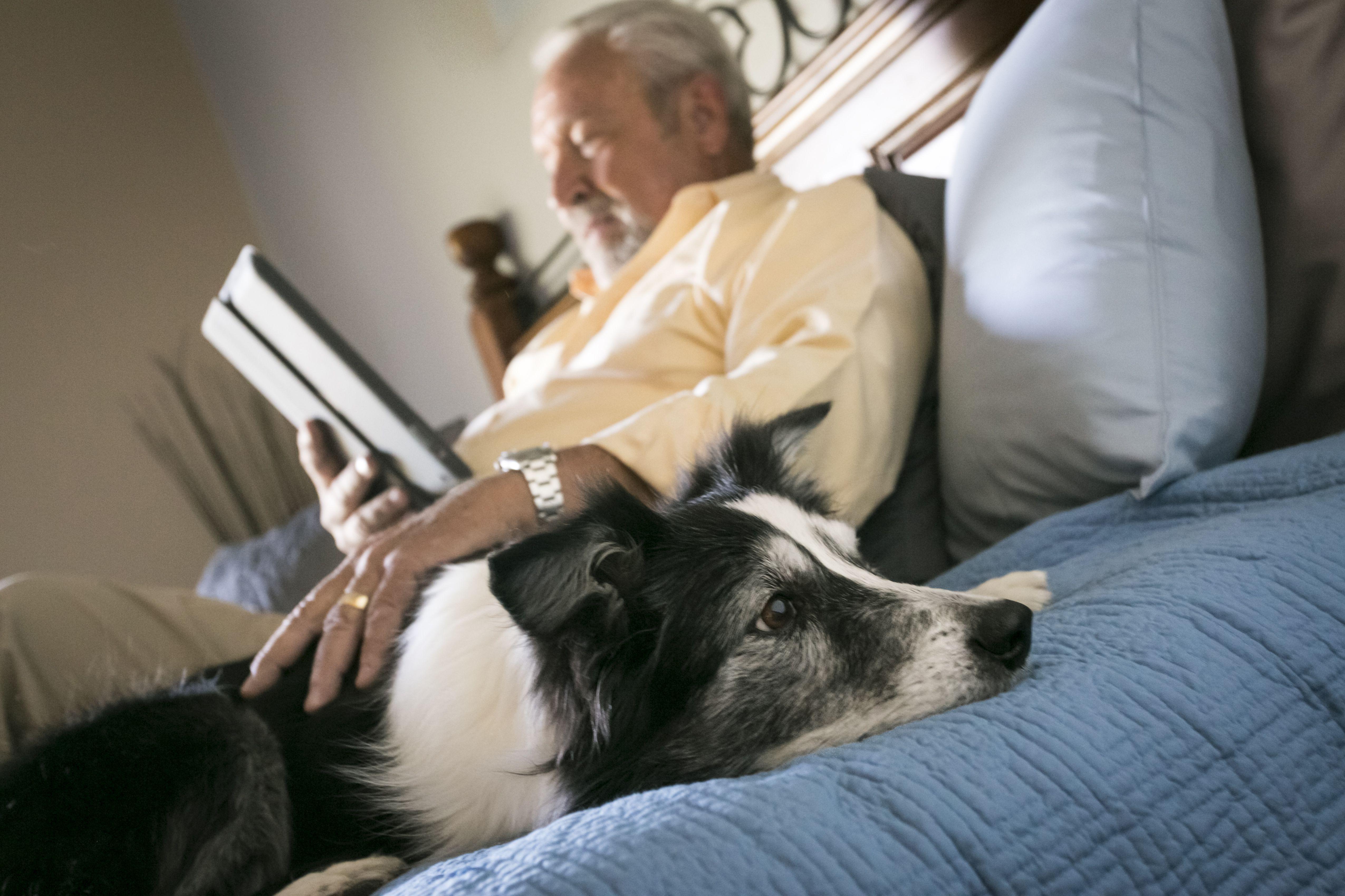 Hombre mayor acostado en la cama con perro leyendo tableta digital
