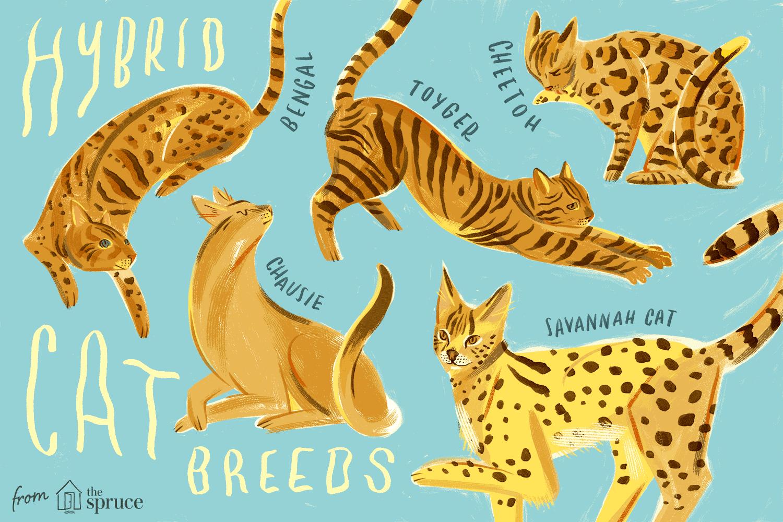 Hybrid Cats That Evoke Their Wild Cousins