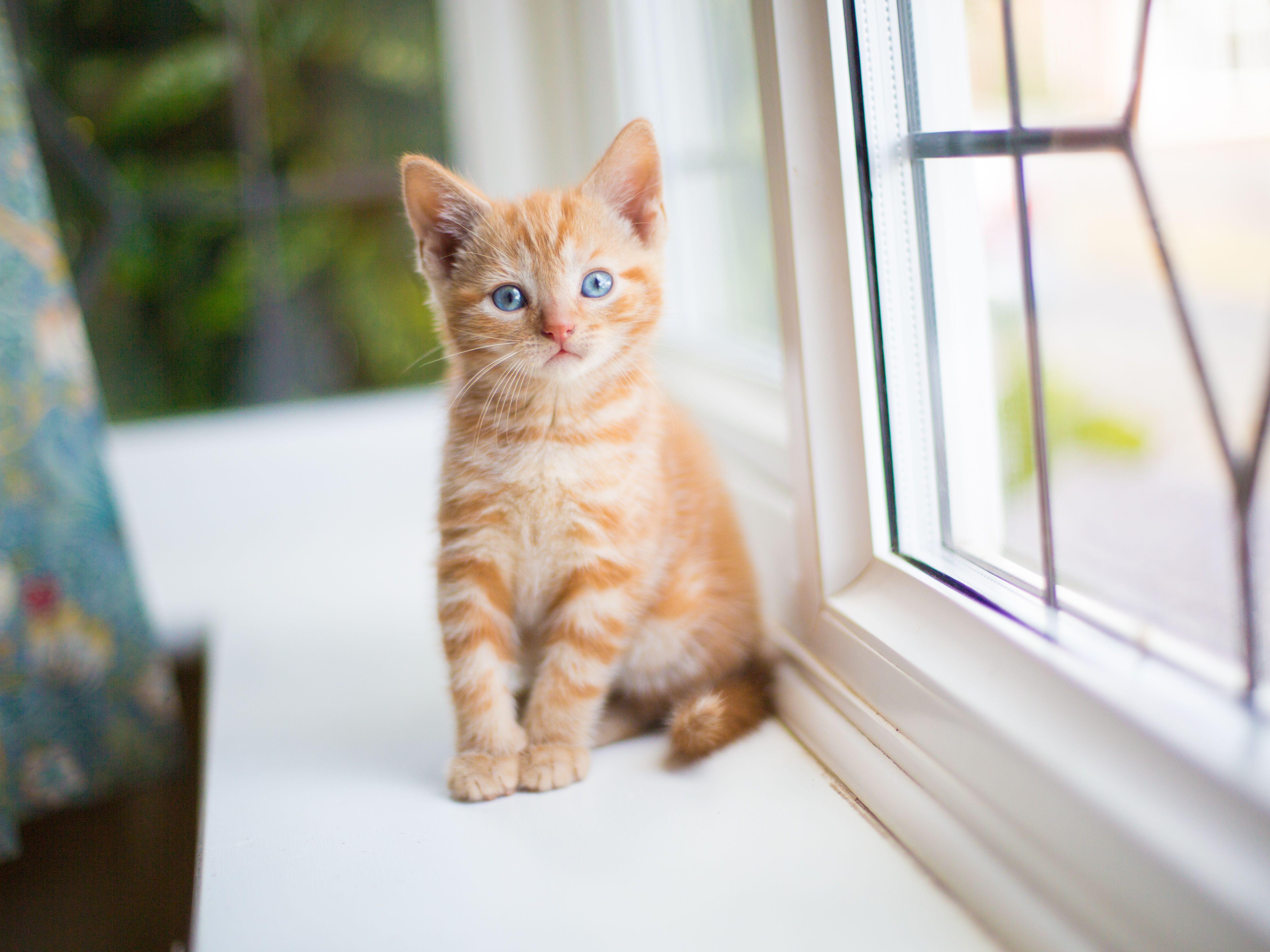 3 Ways To Determine The Gender Of A Kitten