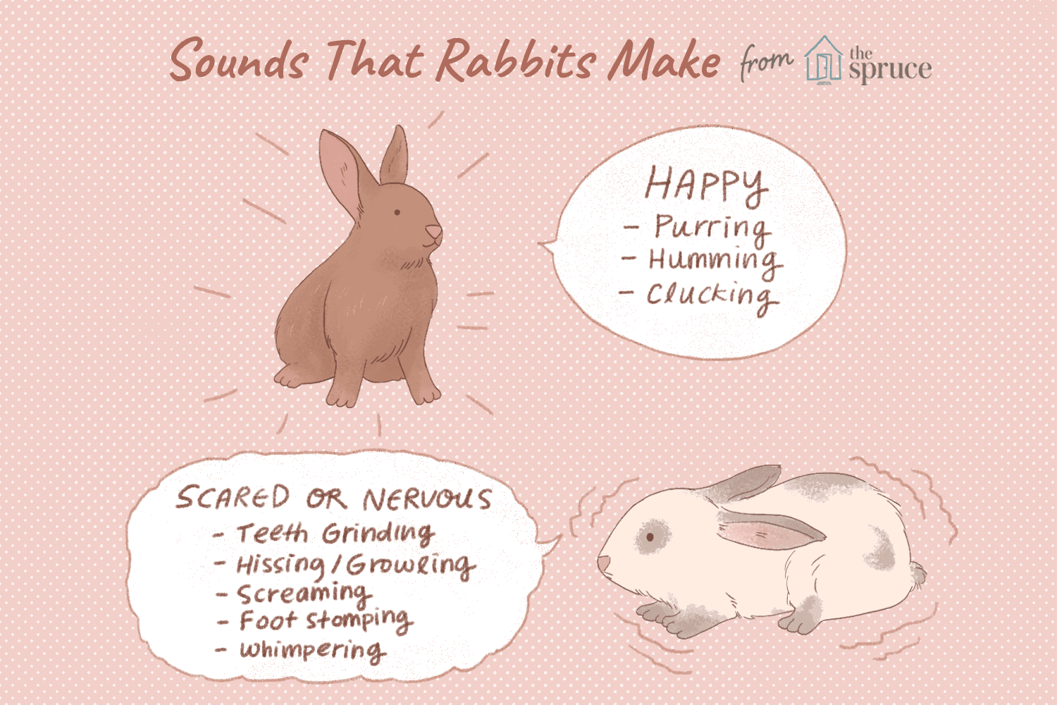 10 Sounds That Rabbits Typically Make How To Build Cuckoo Sound Generator Illustration Of