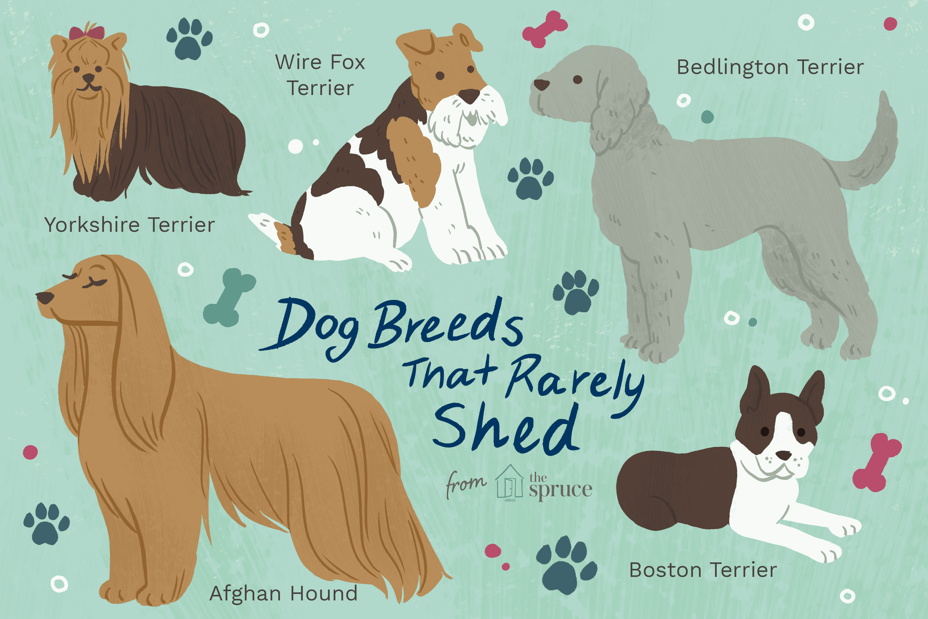 10 Best Dog Breeds That Don T Shed Much