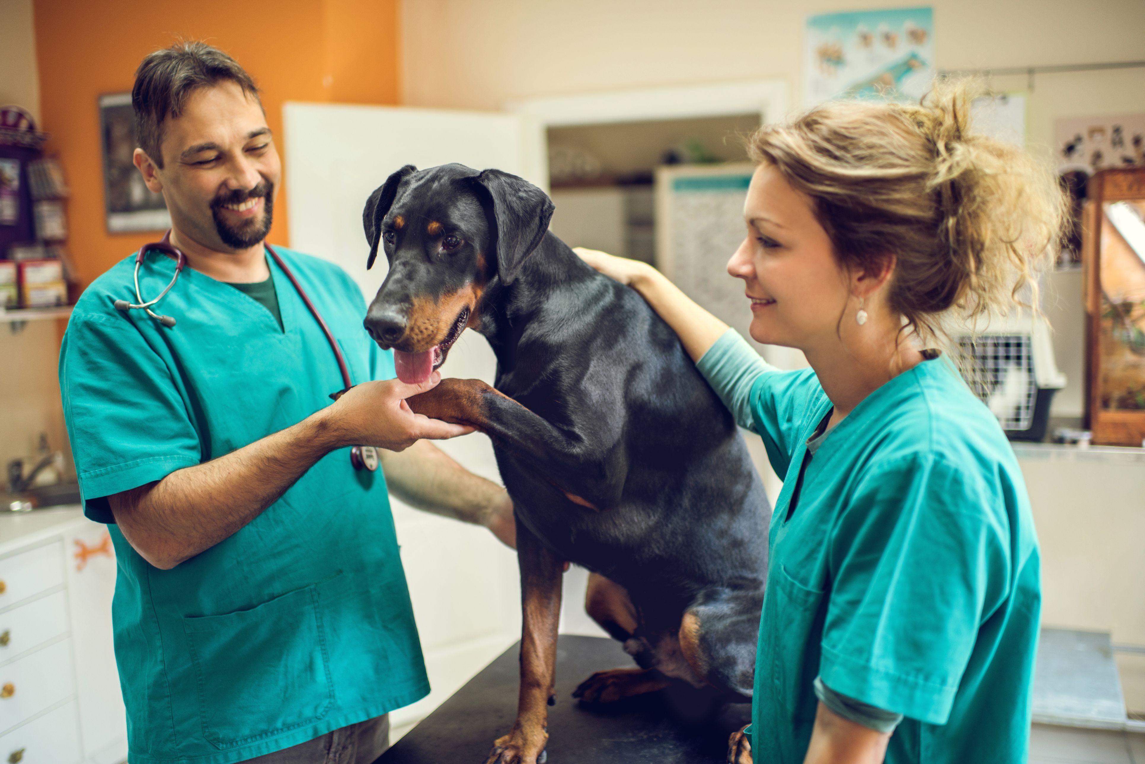 Клиника для животных картинки