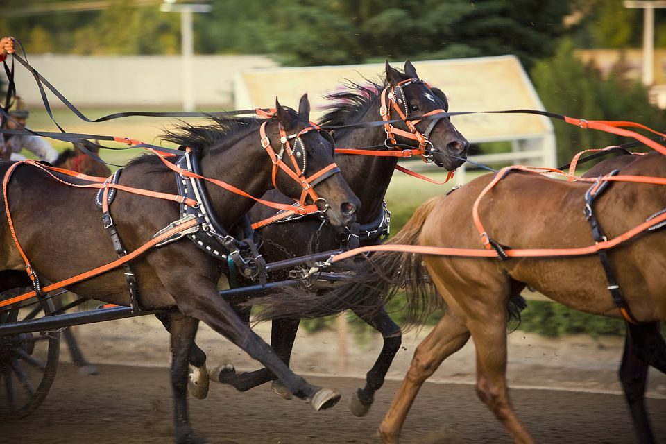 thoroughbred horses racing in harness