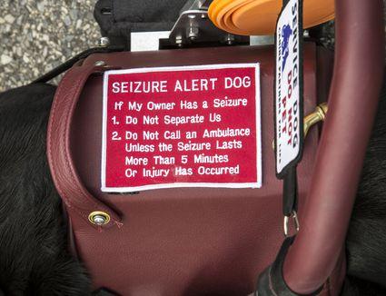 what is a seizure dog
