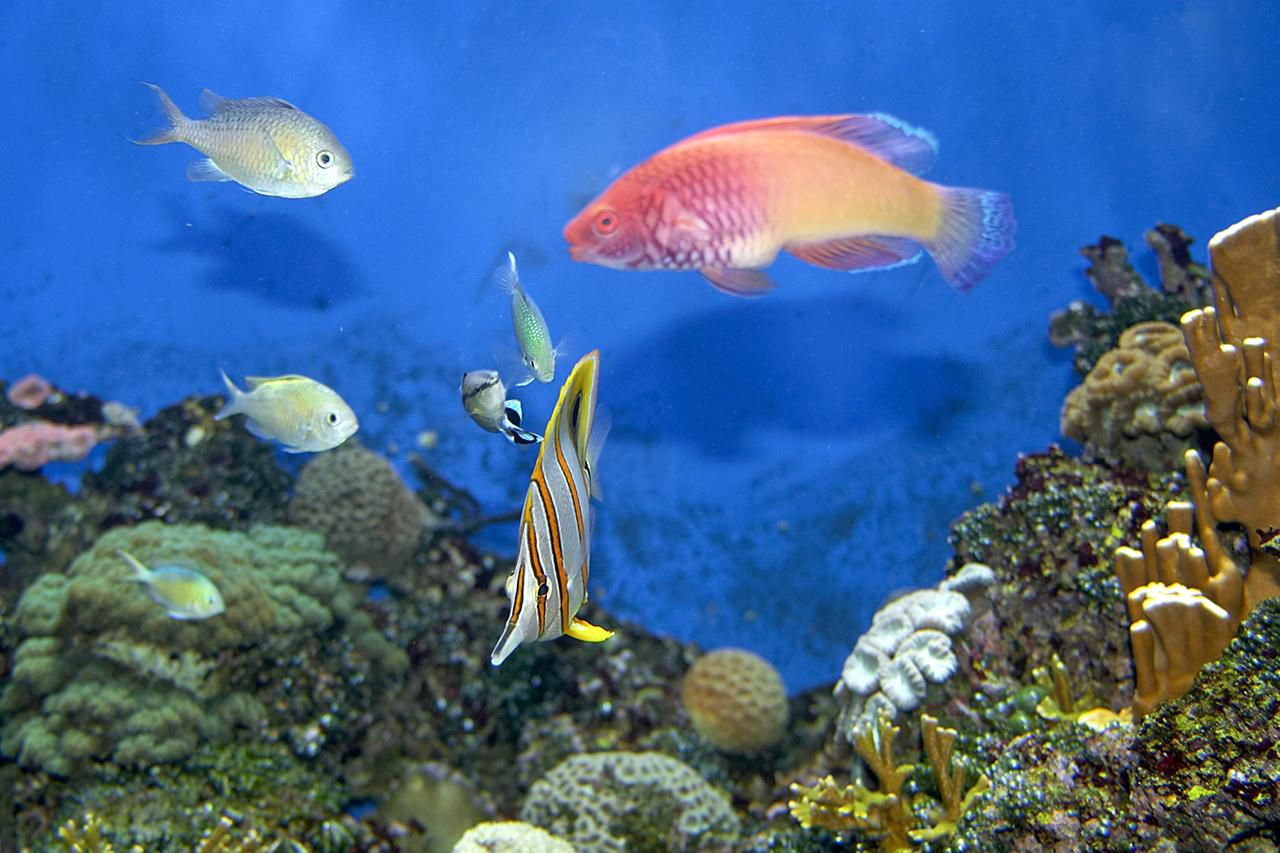 Tropical Fish swimming in aquarium