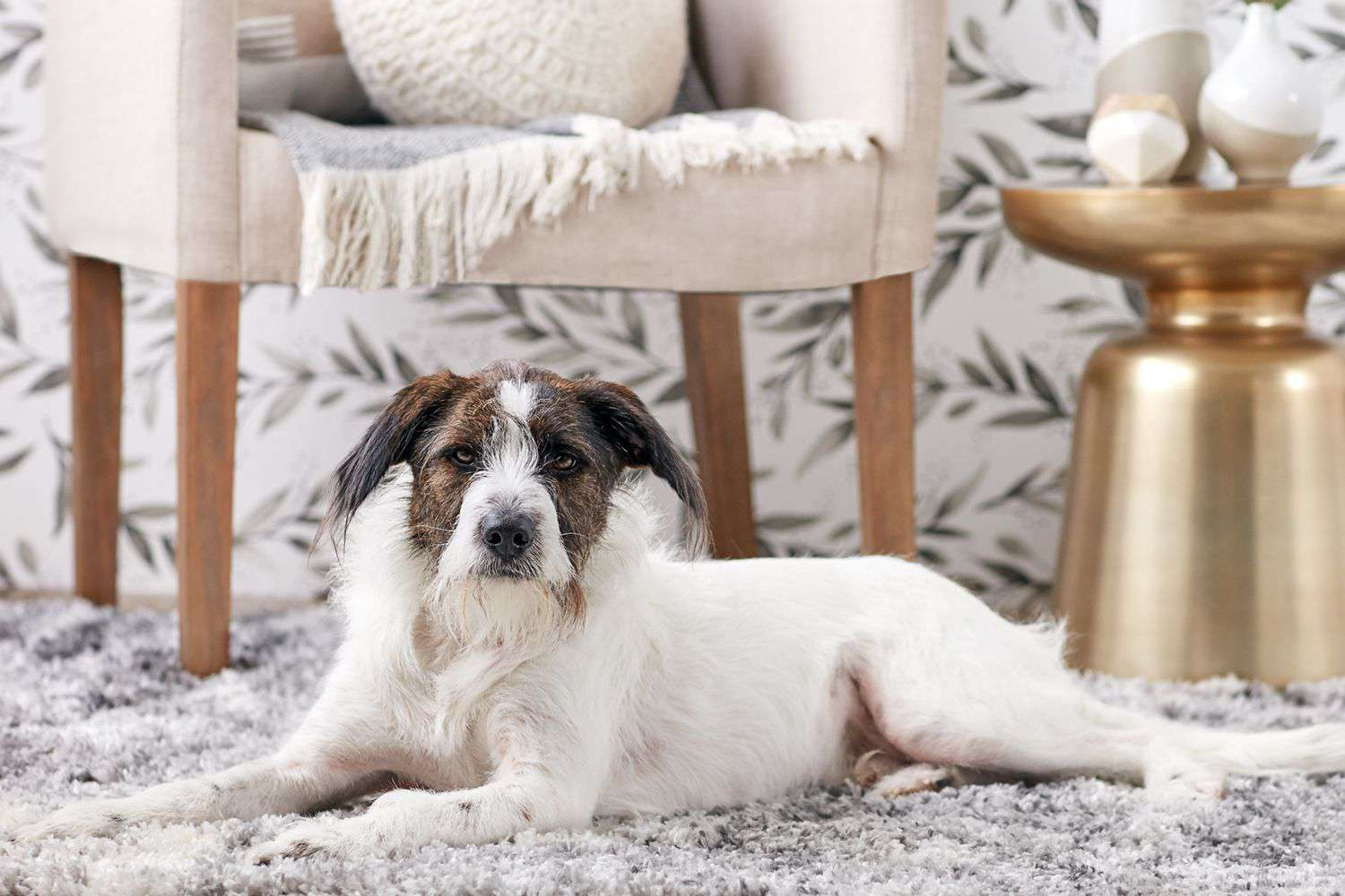 Brown and white mutt dog lying on rug