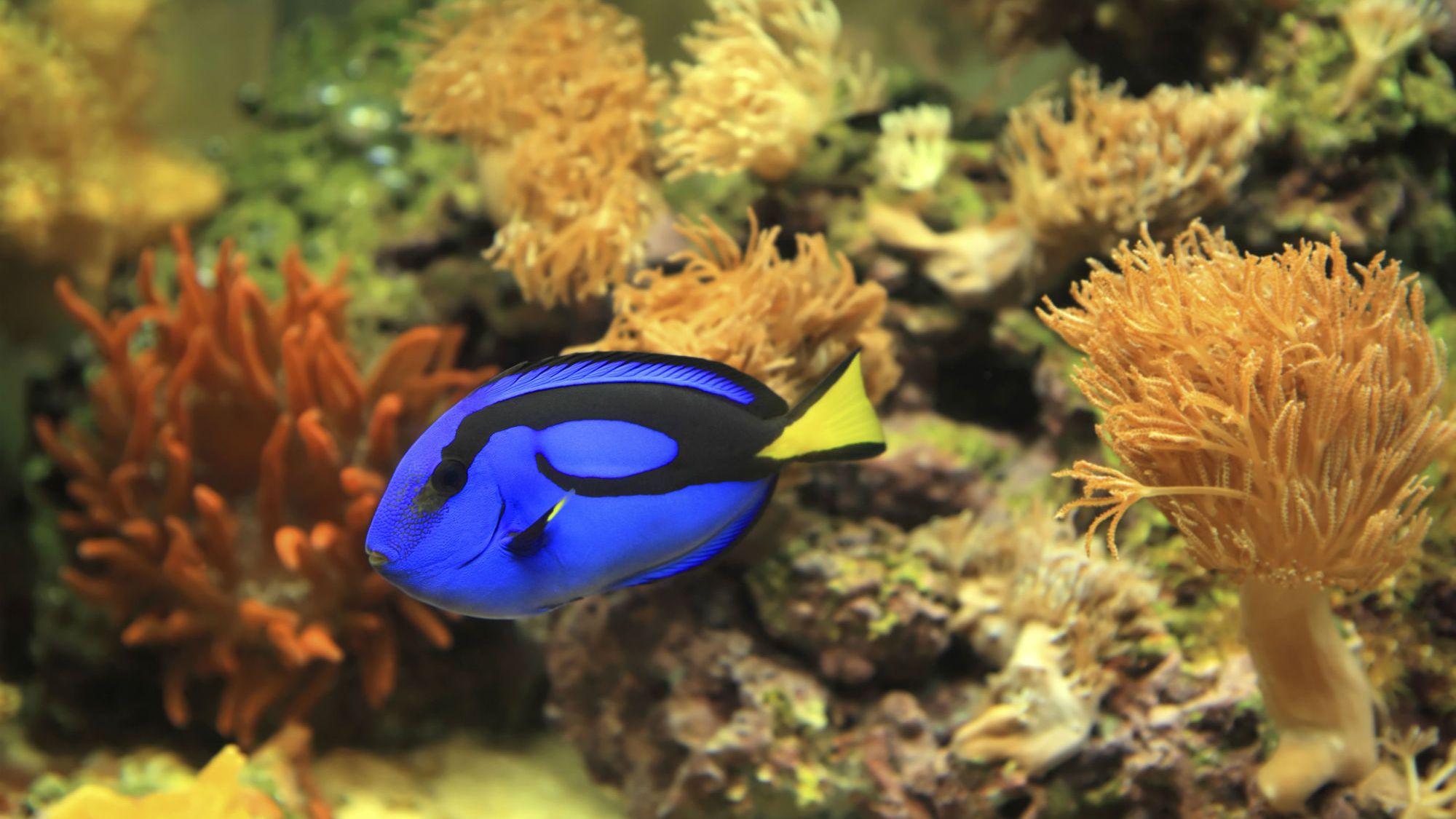 How To Control Algae In A Saltwater Aquarium