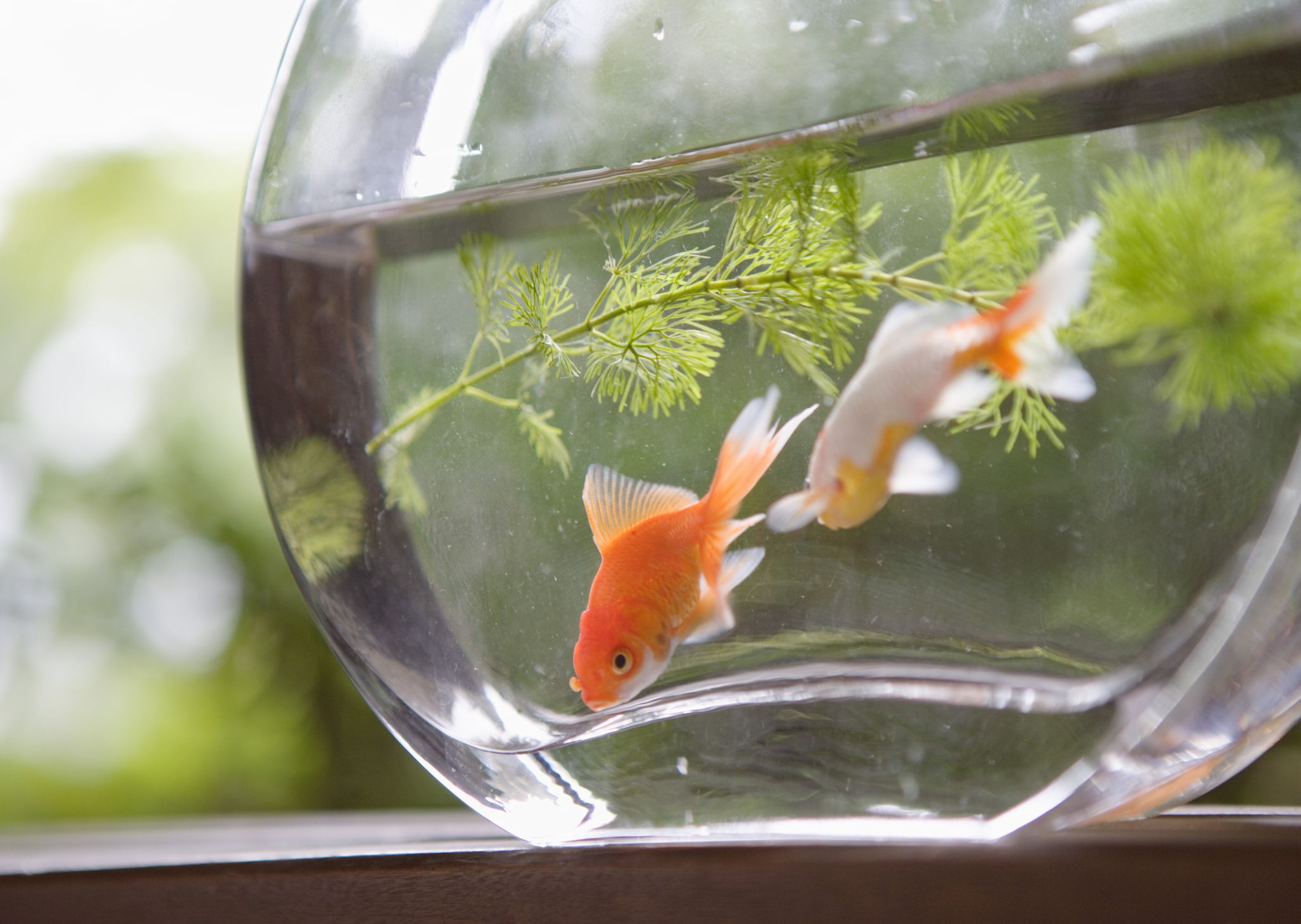 Fish Beginning With S For Cats