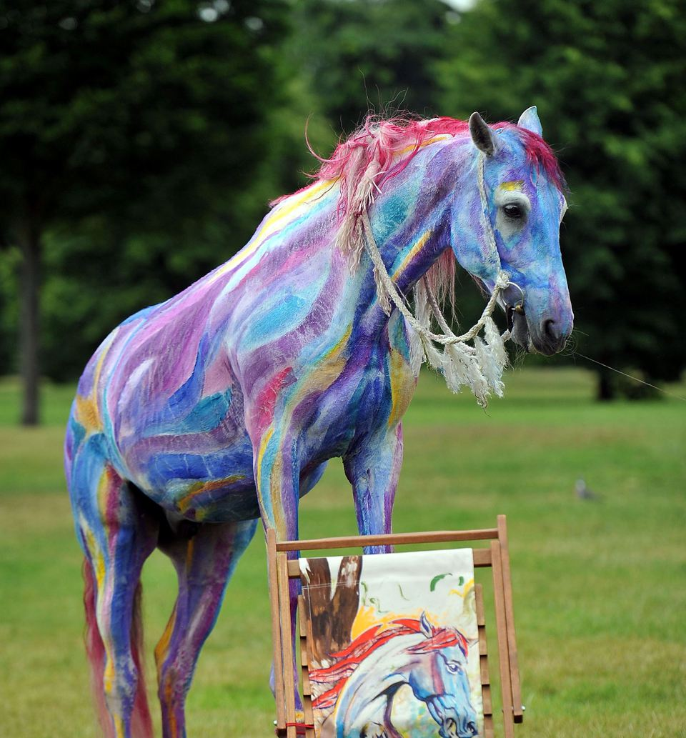 Decorate a horse for a parade or costume class decorate a horse with color solutioingenieria Gallery
