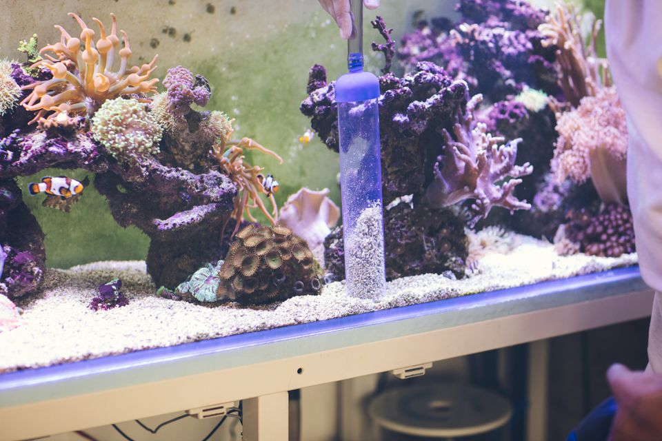 Reef Tank cleaning