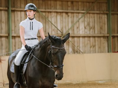 Looking For a Bombproof Horse?