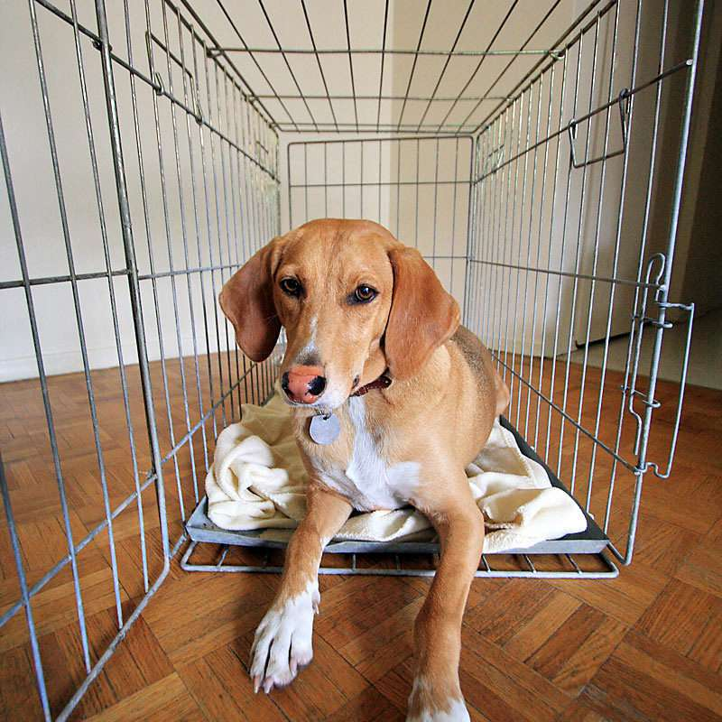 Puppy in Crate - Photo of Dog in Kennel
