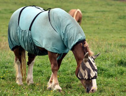Should Your Horse Wear A Winter Blanket