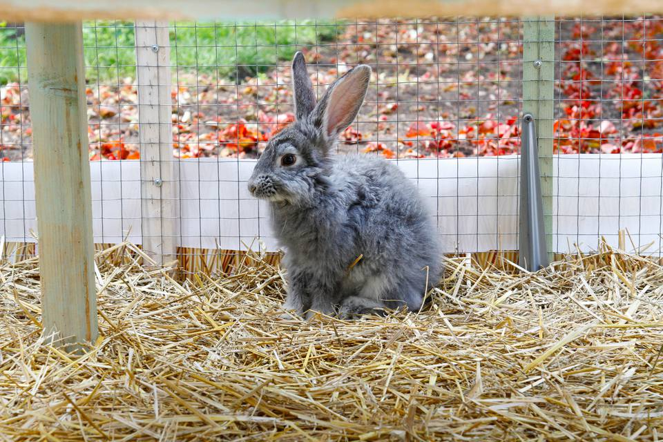 Domestic rabbit sitting in a cage