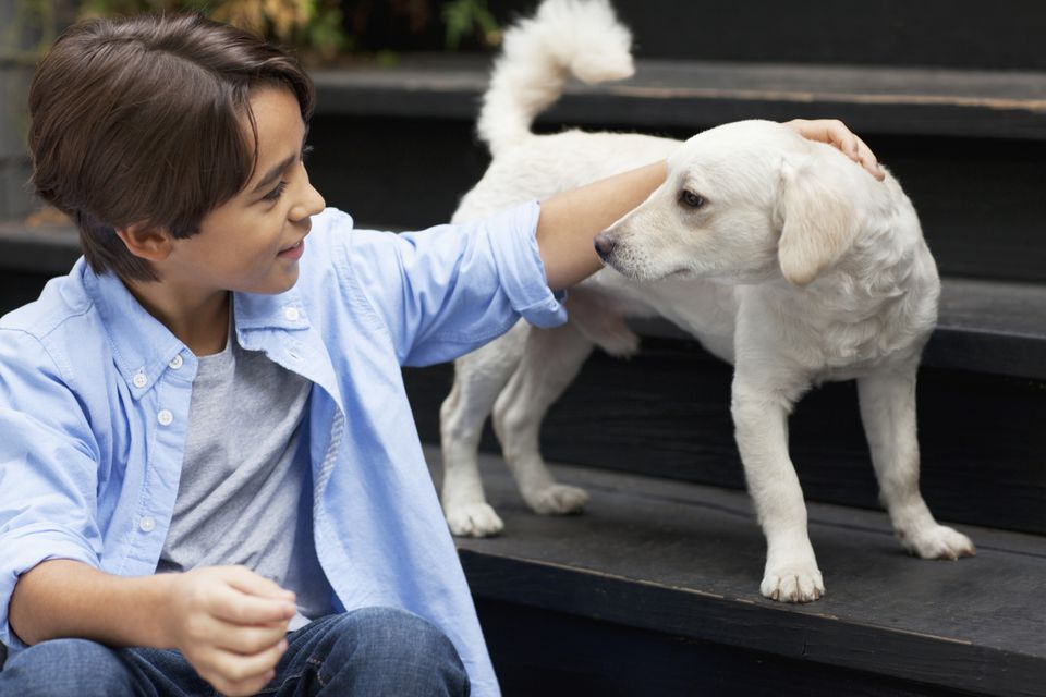 A child pets a dog standing on stairs.