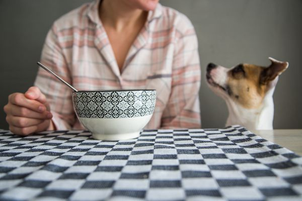 dog looking at cereal
