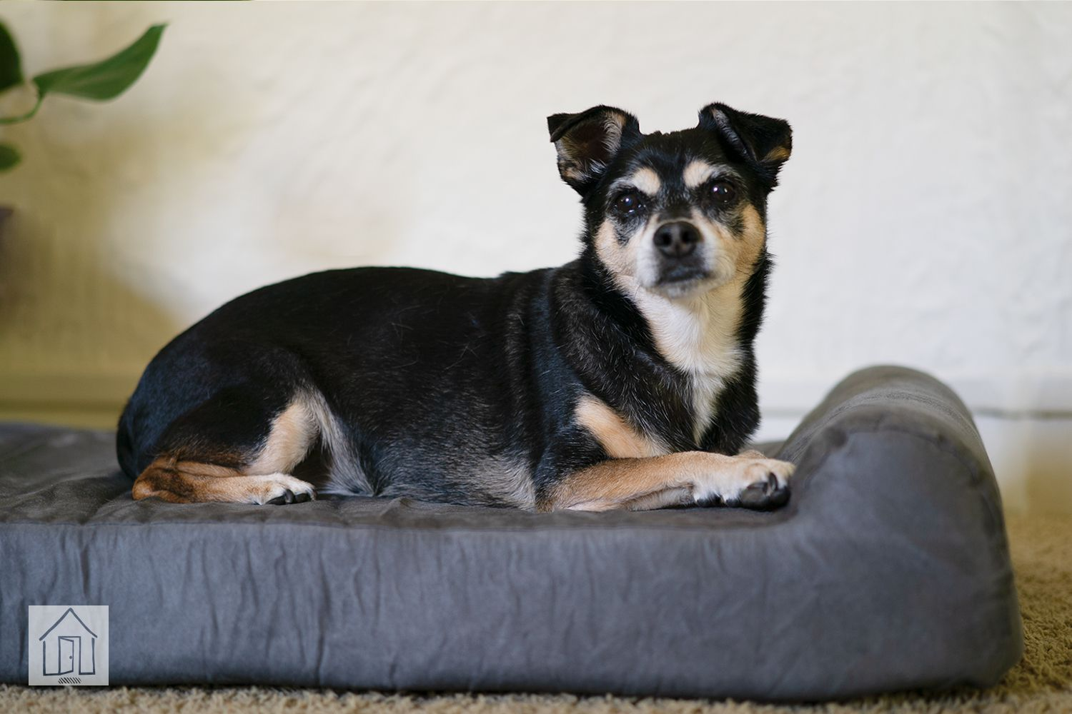 Picture of: Big Barker Headrest Edition Dog Bed Review Great For Senior Dogs